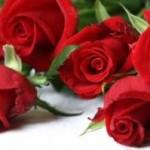 Conta solo le rose