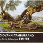 Forme e psiche: l'ulivo di Giovanni Tamburrano